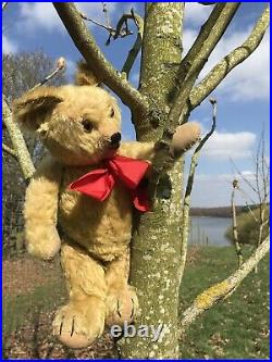 BEAUTIFUL Rare 1920's English OMEGA Teddy Bear Old Antique English with Hump